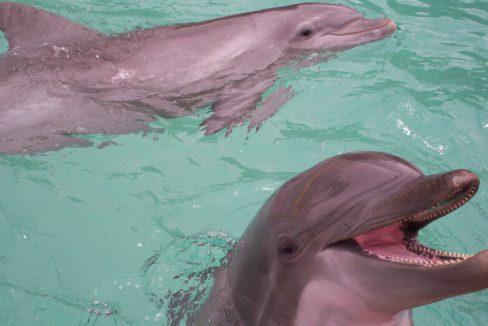 Bottlenose_Dolphins_at_Seaworld_Orlando_terrenosnaflorida-com_shutterstock_168467_1200x680