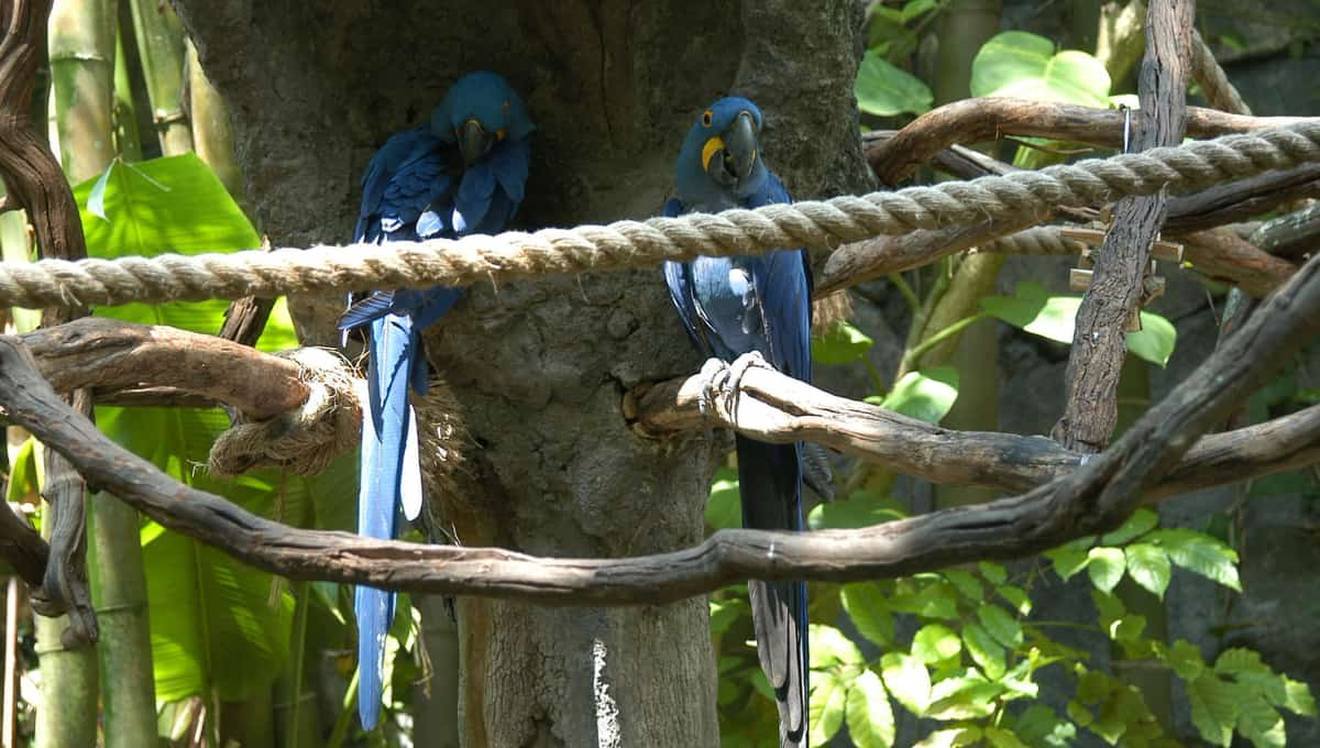 Couple_of_parrots_on_a_tree_at_Seaworld_park_Orlando_Florida_terrenosnaflorida-com_shutterstock_539015_1200x680