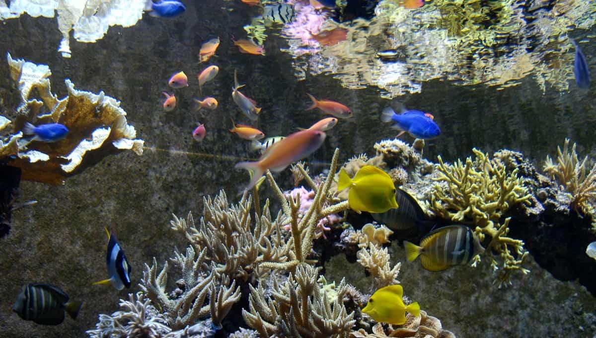 Tropical_aquarium_Seaworld_park_Orlando_Florida_terrenosnaflorida-com_shutterstock_577043_1200x680